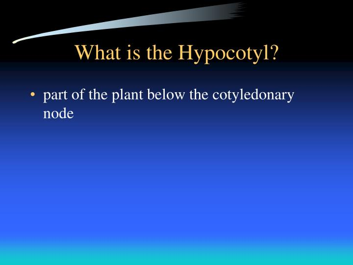 What is the Hypocotyl?