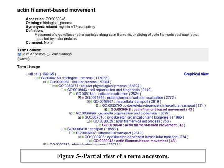 Figure 5--Partial view of a term ancestors.
