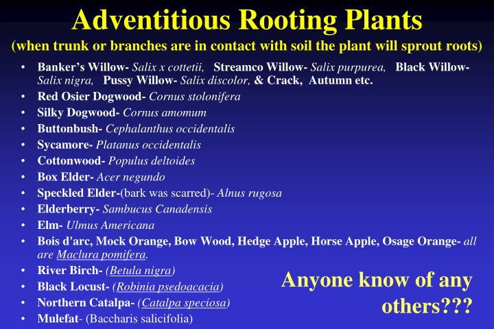 Adventitious Rooting Plants