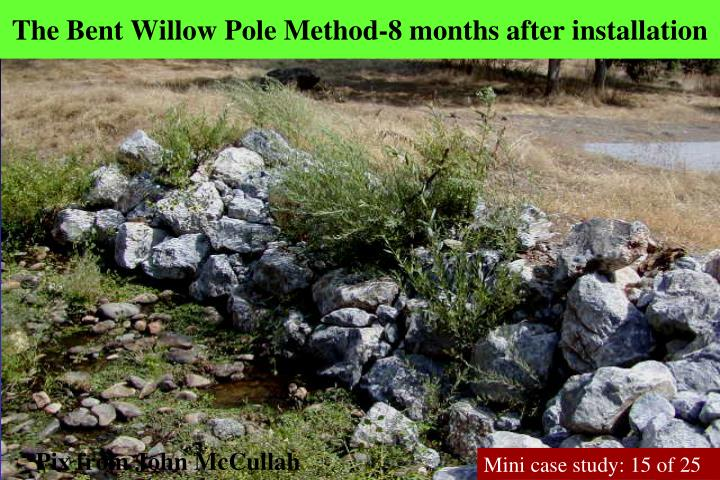 The Bent Willow Pole Method-8 months after installation