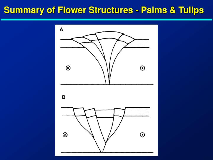 Summary of Flower Structures - Palms & Tulips