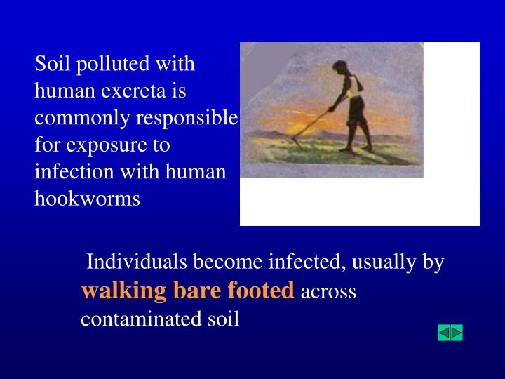 Soil polluted with human excreta is commonly responsible for exposure to infection with human hookworms