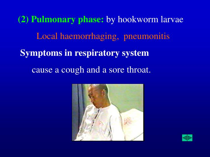 (2) Pulmonary phase: