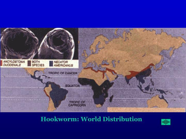 Hookworm: World Distribution