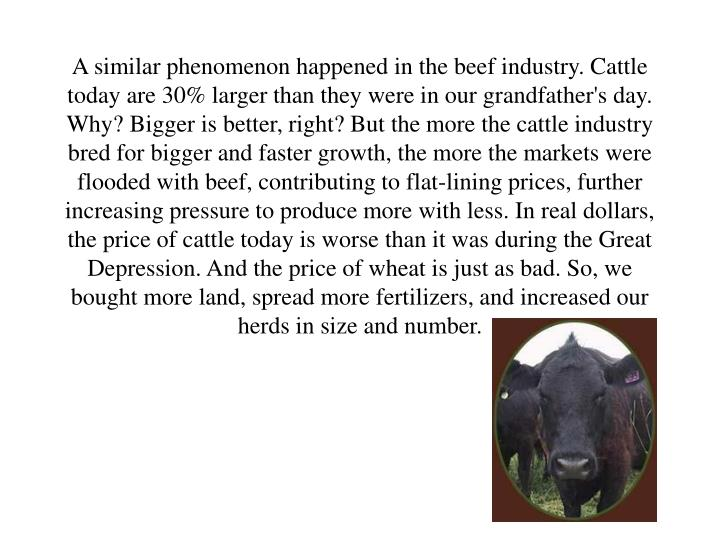 A similar phenomenon happened in the beef industry. Cattle today are 30% larger than they were in our grandfather's day. Why? Bigger is better, right? But the more the cattle industry bred for bigger and faster growth, the more the markets were flooded with beef, contributing to flat-lining prices, further increasing pressure to produce more with less. In real dollars, the price of cattle today is worse than it was during the Great Depression. And the price of wheat is just as bad. So, we bought more land, spread more fertilizers, and increased our herds in size and number.