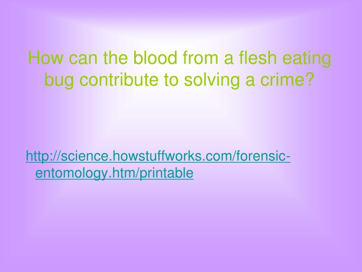 How can the blood from a flesh eating bug contribute to solving a crime?