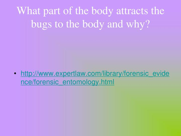 What part of the body attracts the bugs to the body and why?