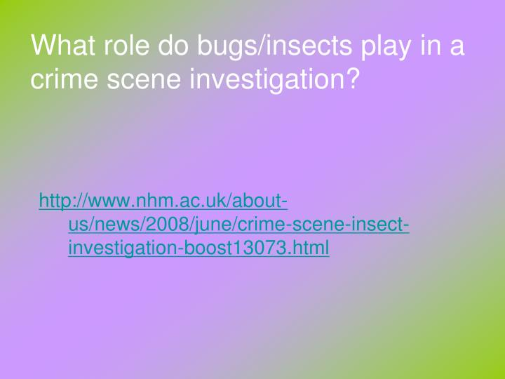 What role do bugs/insects play in a crime scene investigation?