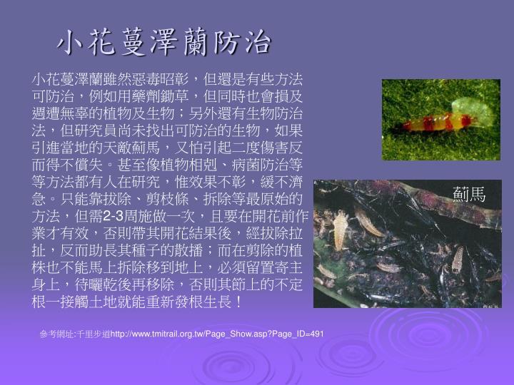 小花蔓澤蘭防治
