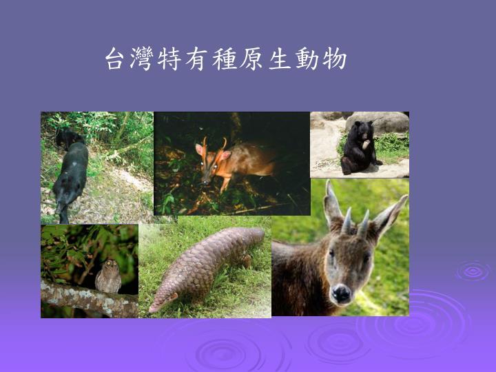 台灣特有種原生動物