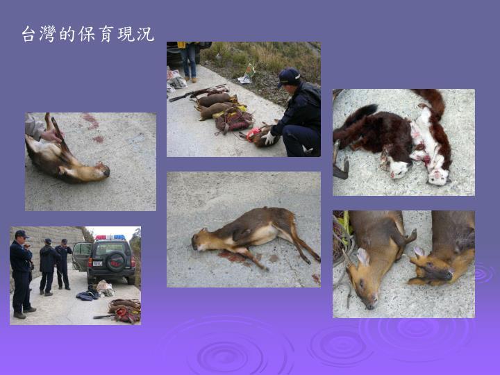 台灣的保育現況