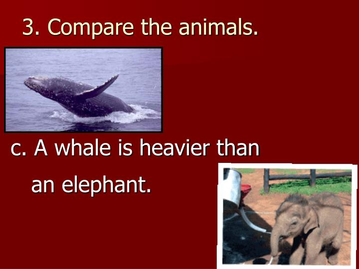 3. Compare the animals.
