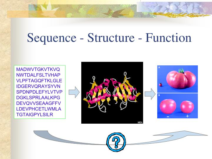 Sequence - Structure - Function