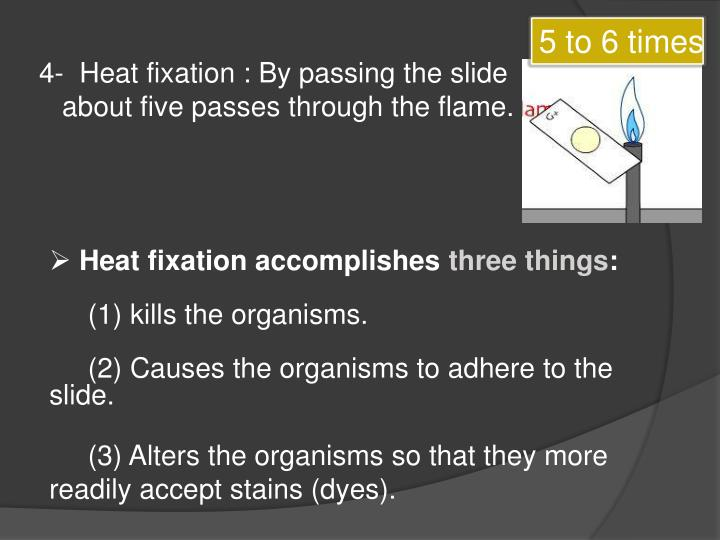 4-  Heat fixation : By passing the slide