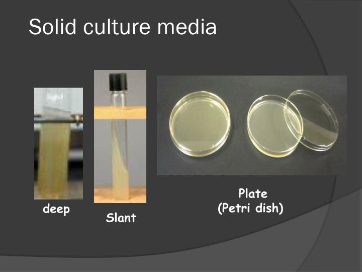 Solid culture media