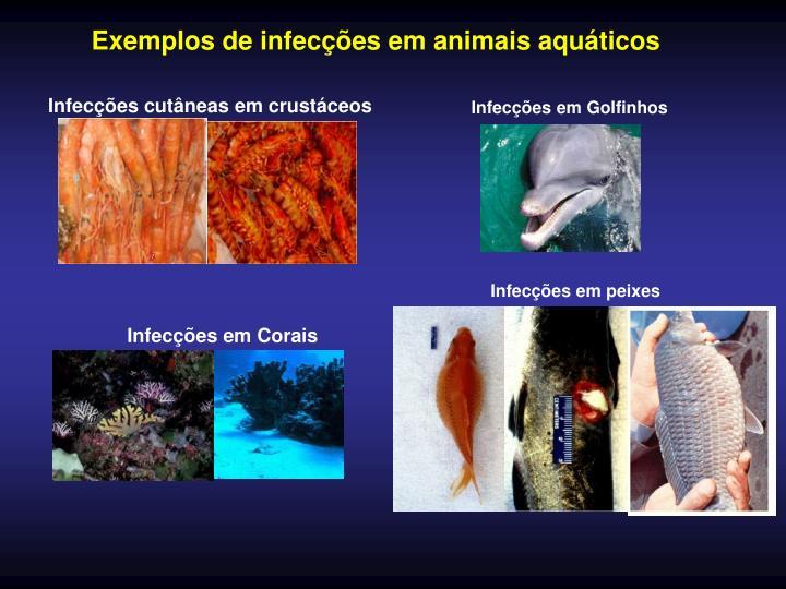 Exemplos de infecções em animais aquáticos