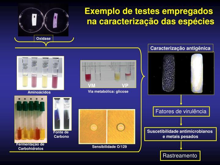 Exemplo de testes empregados