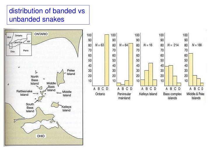 distribution of banded vs
