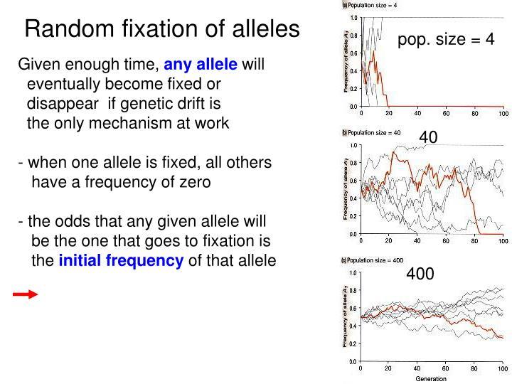 Random fixation of alleles