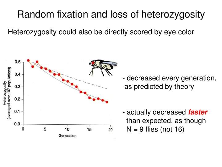Random fixation and loss of heterozygosity