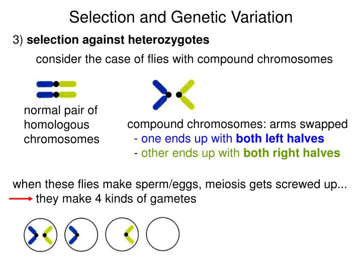 Selection and Genetic Variation