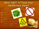 what not to feed your netherland dwarf