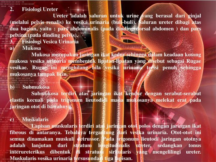 2. Fisiologi Ureter