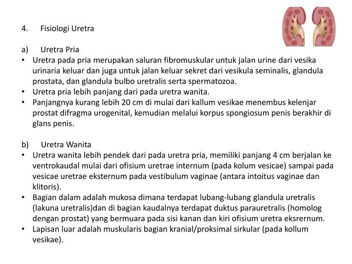 4. Fisiologi Uretra