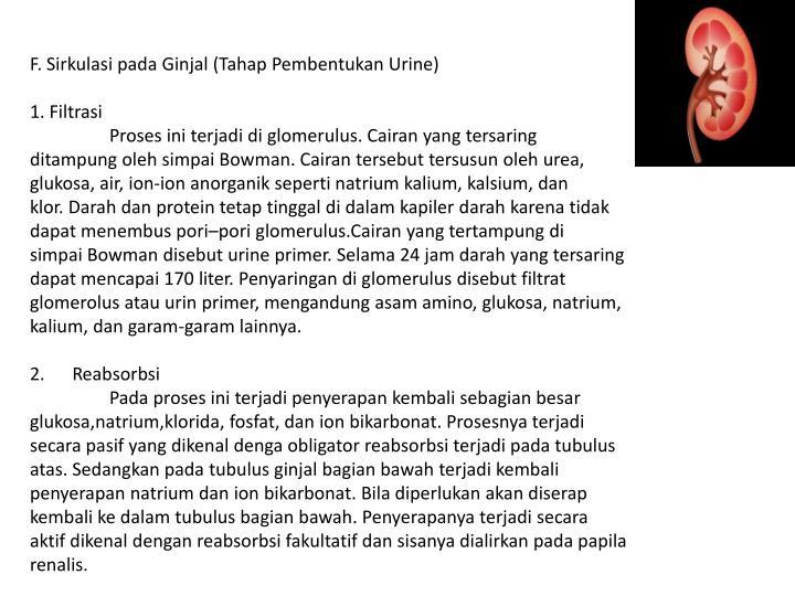 F.Sirkulasi pada Ginjal (Tahap Pembentukan Urine)