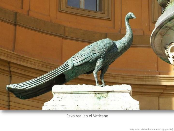 Pavo real en el Vaticano