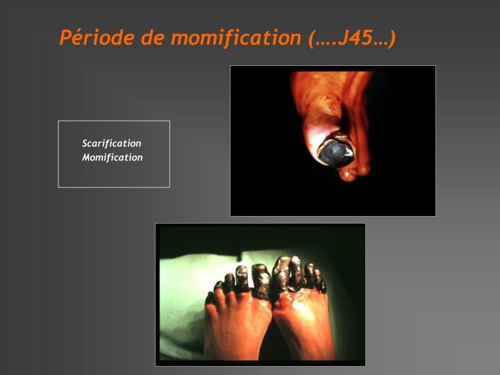 Période de momification (….J45…)