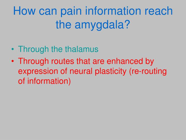 How can pain information reach the amygdala?