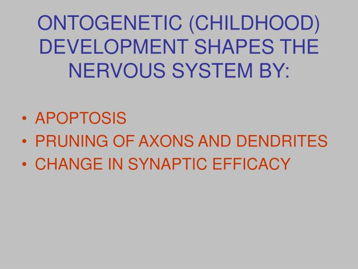 ONTOGENETIC (CHILDHOOD) DEVELOPMENT SHAPES THE NERVOUS SYSTEM BY: