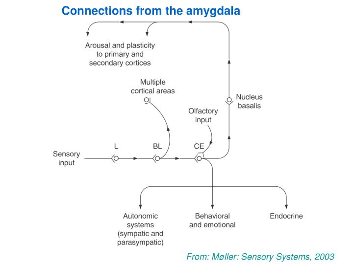 Connections from the amygdala