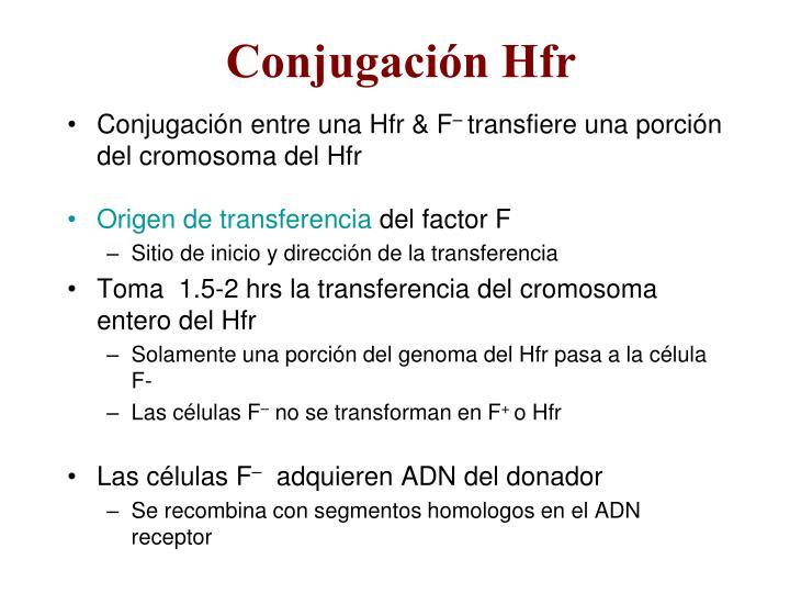 Conjugación Hfr