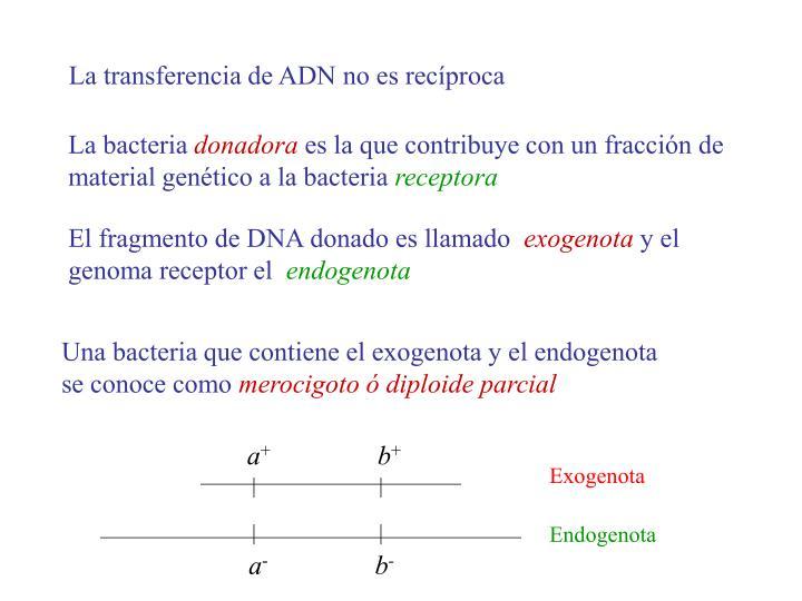 La transferencia de ADN no es recíproca