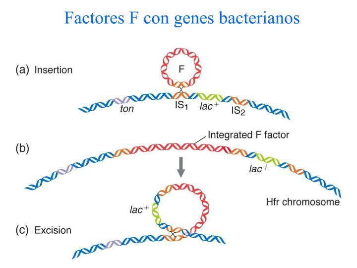 Factores F con genes bacterianos