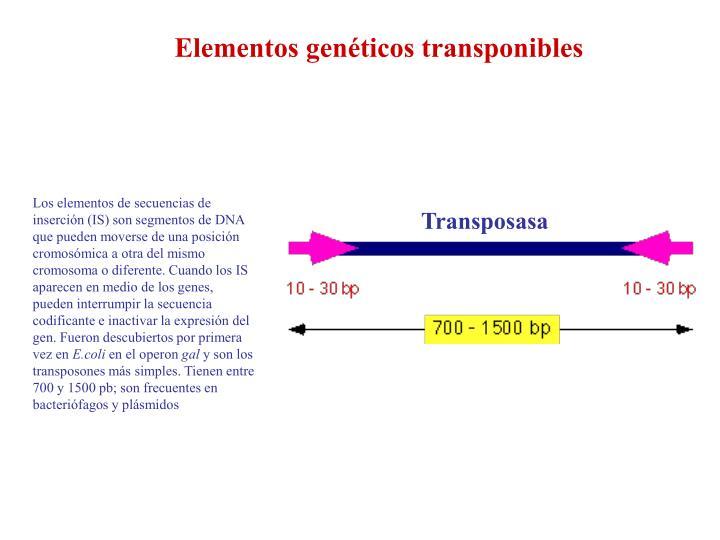 Elementos genéticos transponibles