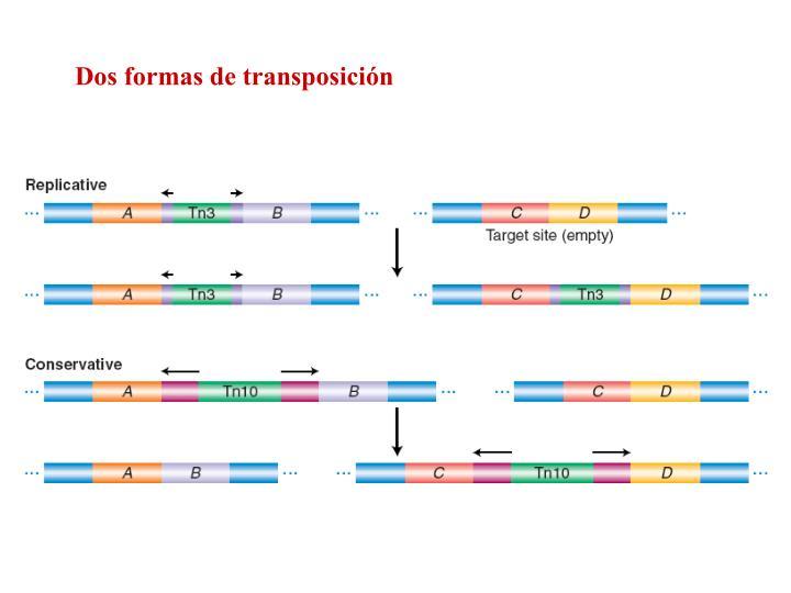 Dos formas de transposición