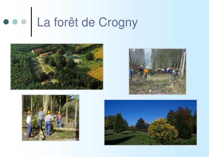La forêt de Crogny