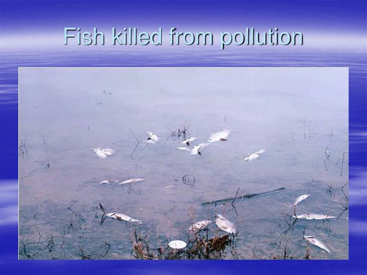 Fish killed from pollution
