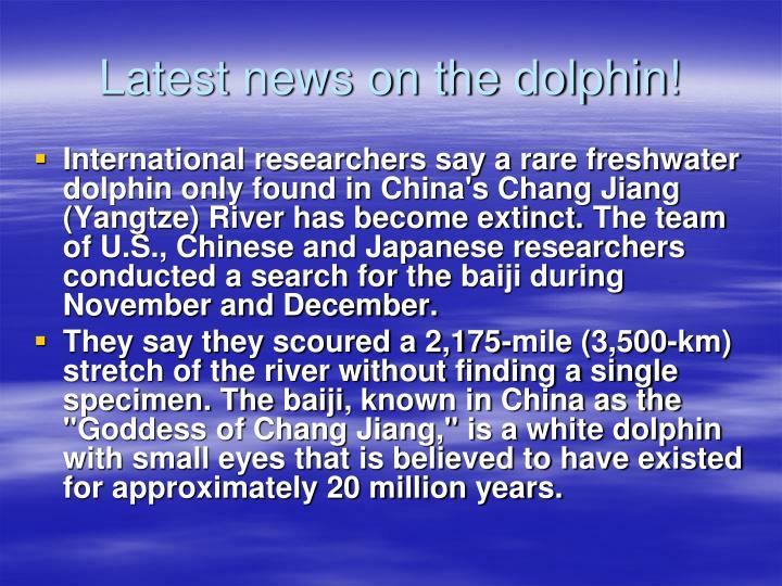 Latest news on the dolphin!
