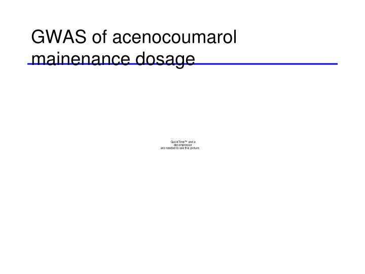GWAS of acenocoumarol mainenance dosage