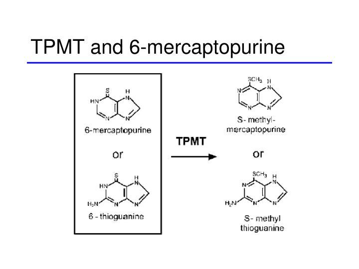 TPMT and 6-mercaptopurine