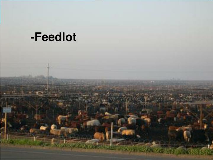 -Feedlot