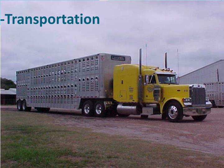 -Transportation