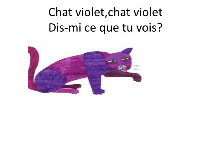 Chat violet,chat violet