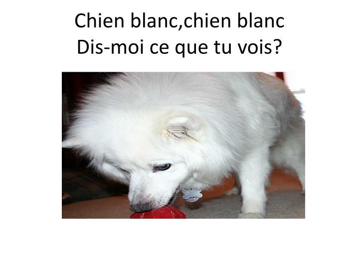 Chien blanc,chien blanc