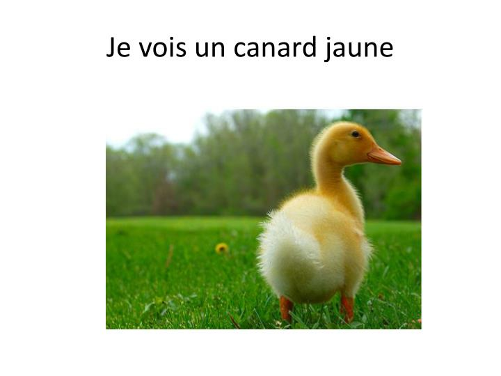 Je vois un canard jaune