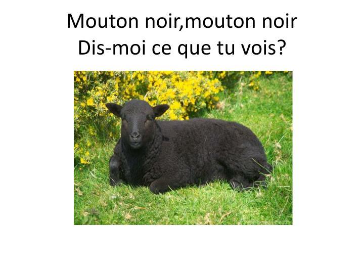 Mouton noir,mouton noir